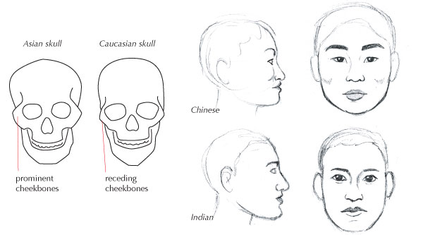 human anatomy fundamentals  advanced facial features