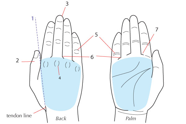 Drawing Lines On Your Wrist : Human anatomy fundamentals how to draw hands