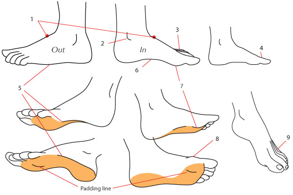 Deatils of the foot in profile