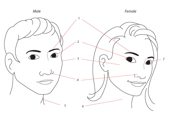 Line Drawing Of Female Face : Human anatomy fundamentals drawing different ages