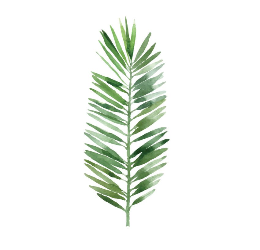 vector leaf graphic