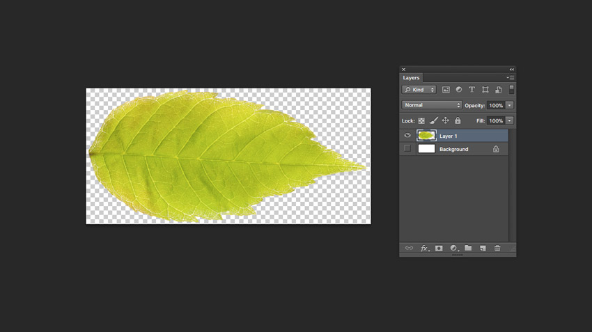 isolated leaf
