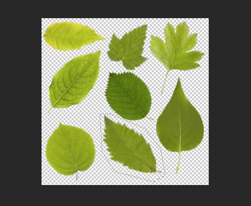 looped off leaf