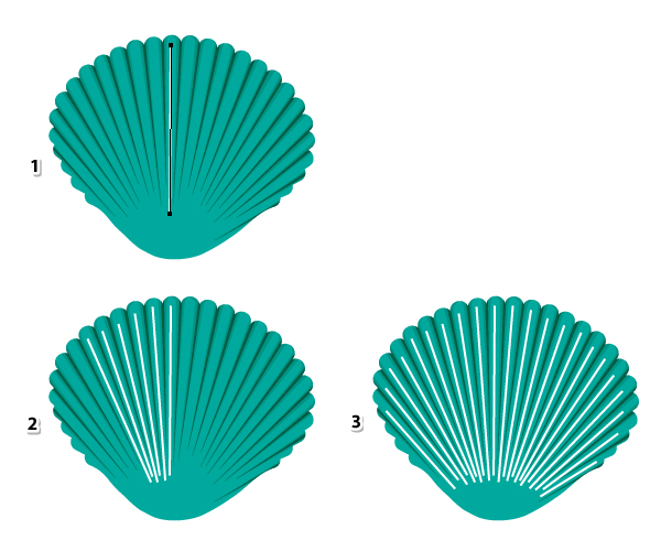 how to draw a seashell spiral