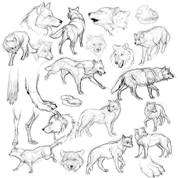 My preparation before drawing a werewolf