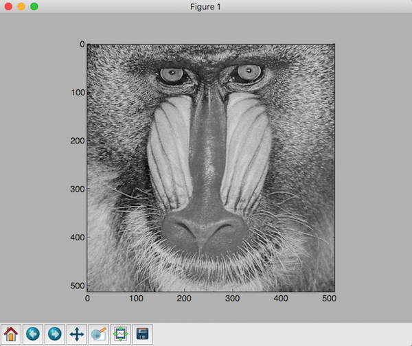Baboon image in grayscale