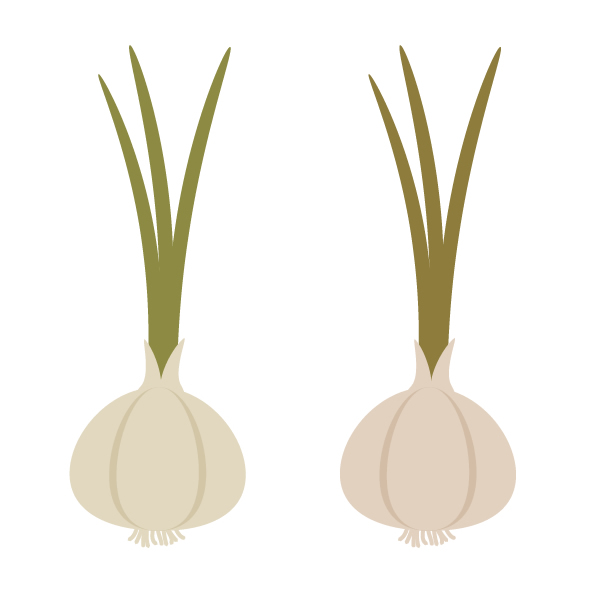 creating another color garlic