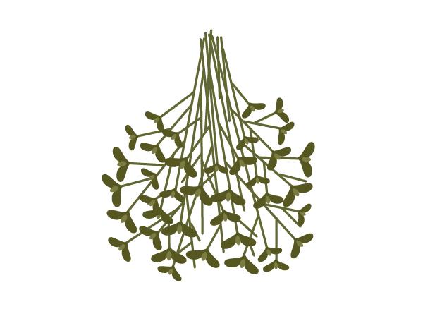 placing the leaves on stalks