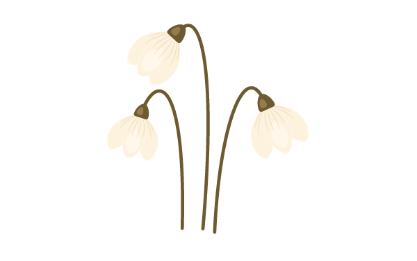 creating more snowdrops