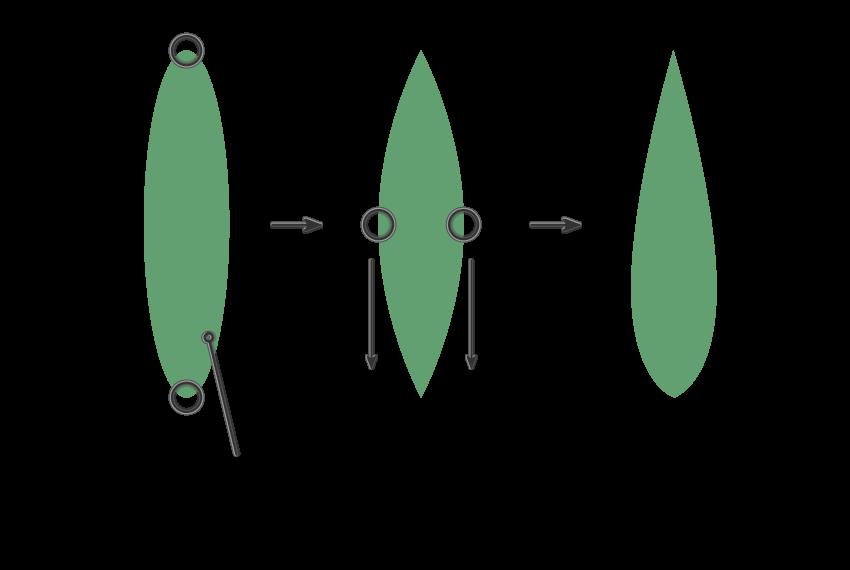 creating Howorthia Fasciata leaf