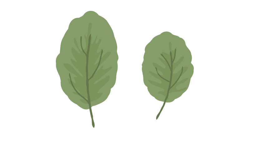 creating another leaf