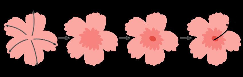 shading the flower in illustrator