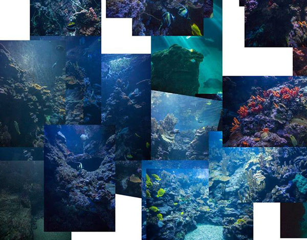 Collage of underwater photos with different color casts