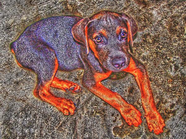 HDR dog