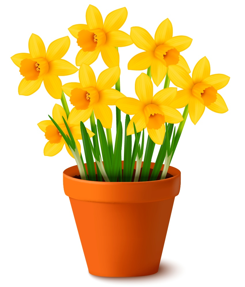 How To Create A Pot Of Daffodils With Gradient Mesh In Adobe
