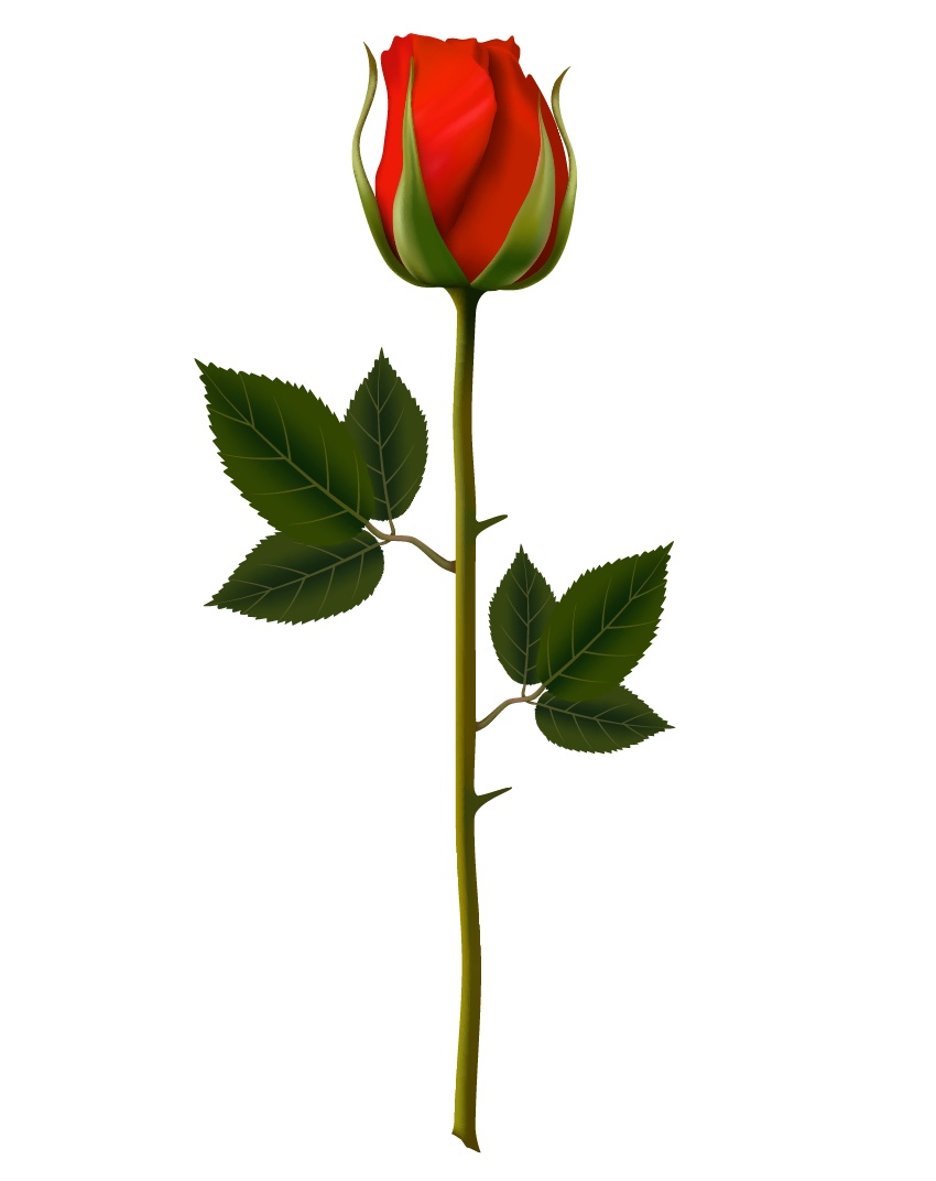 How to Make a Beautiful Mesh Rose From Scratch in Adobe Illustrator