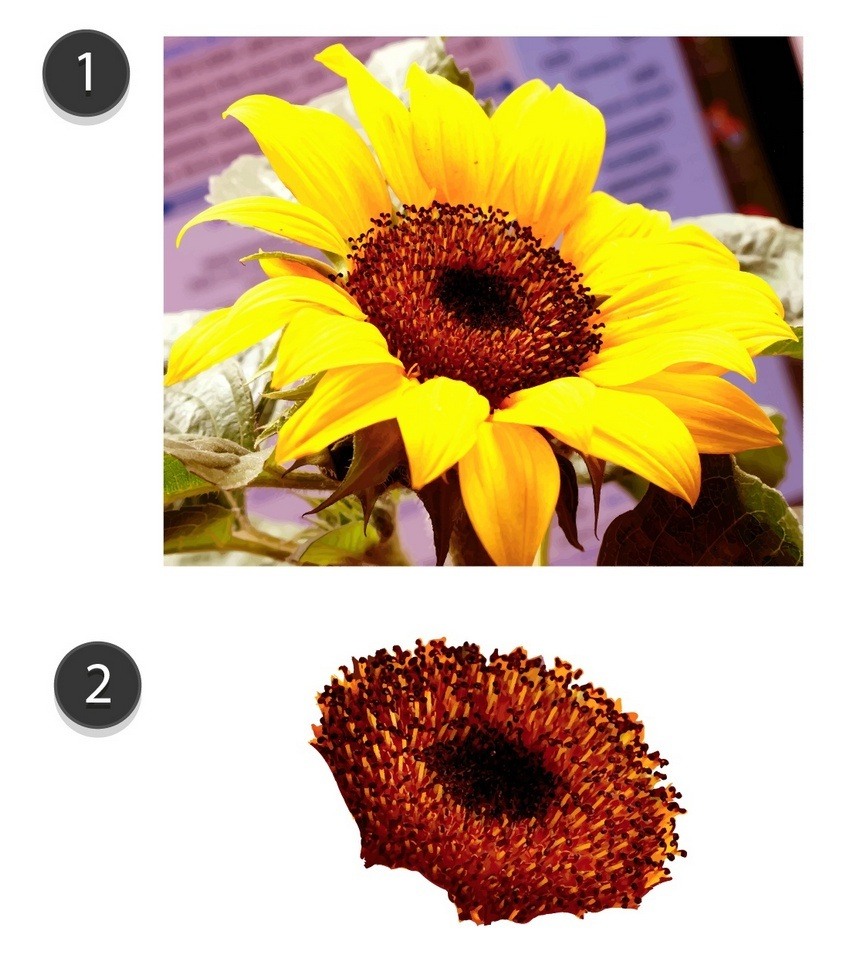 How to Draw a Gradient Mesh Sunflower in Adobe Illustrator
