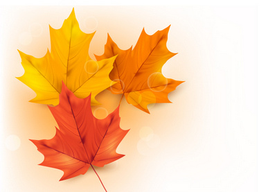 Colorful leaves 24