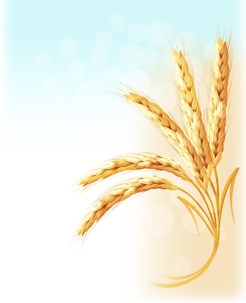 How to Draw Ears of Wheat With Gradient Meshes in Adobe Illustrator