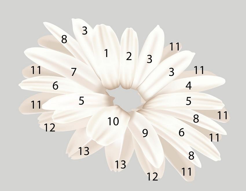 assemble daisy