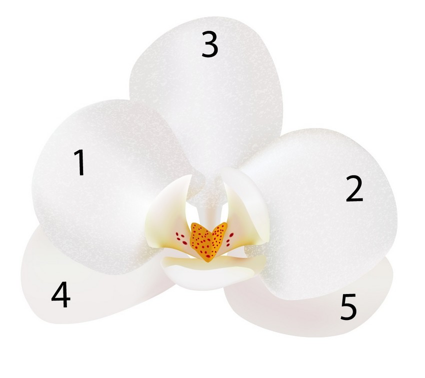 assemble vanilla flower