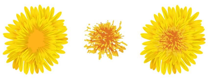 add dandelion middle