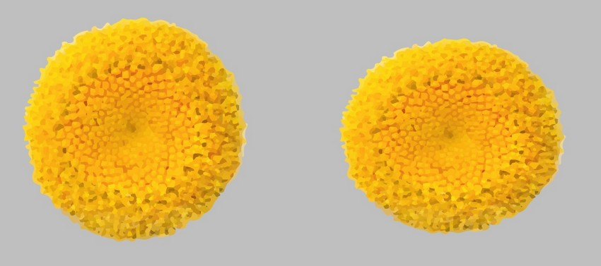 daisy mesh