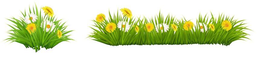 grass daisy dandelion flower vector tutorial