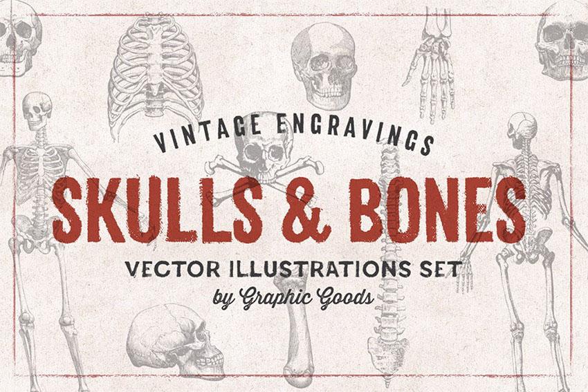 Skulls  Bones