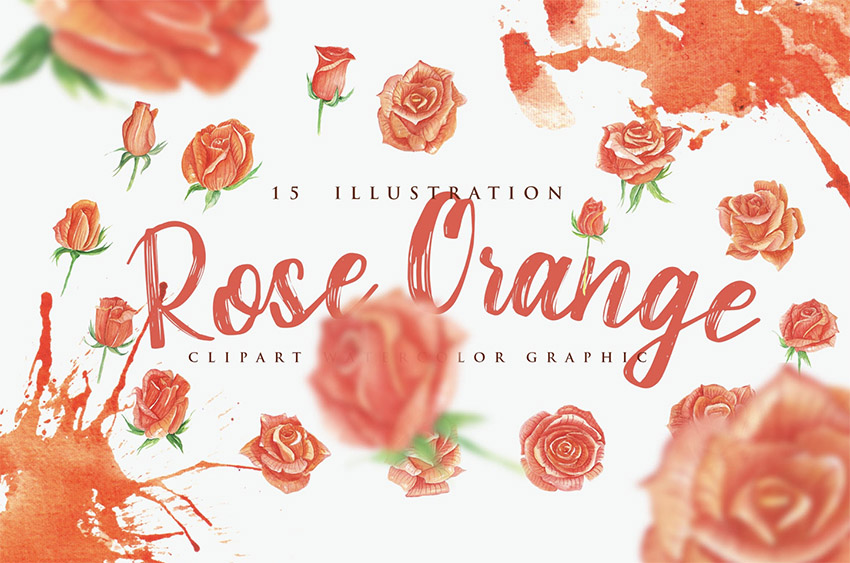 15 Watercolor Rose Orange Flower Illustration