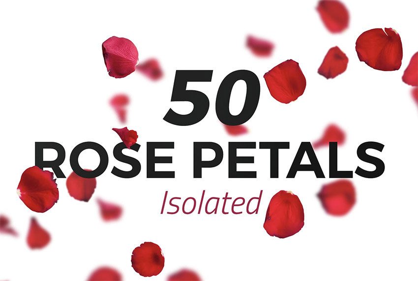 50 Isolated Red Rose Petals