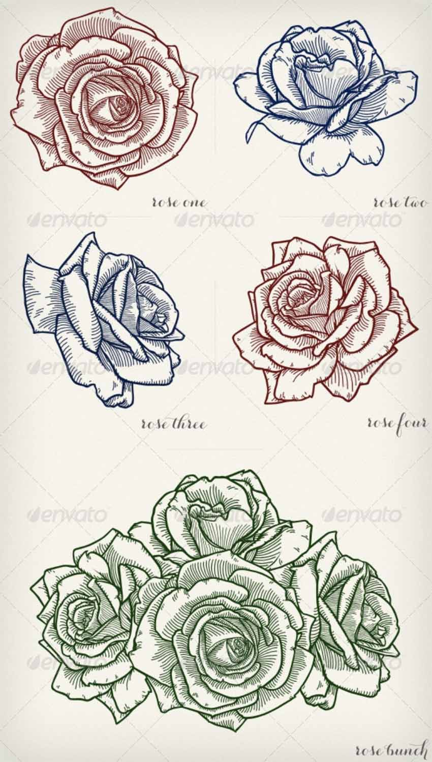 Detailed Vector Roses