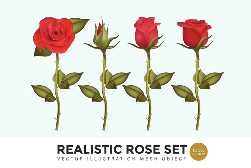 Realistic Rose Set Vector Mesh Illustration