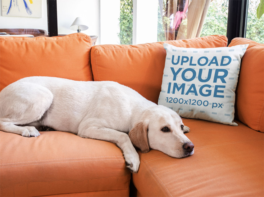 Pillow Mockup on an Orange Sofa Near a Labrador Dog