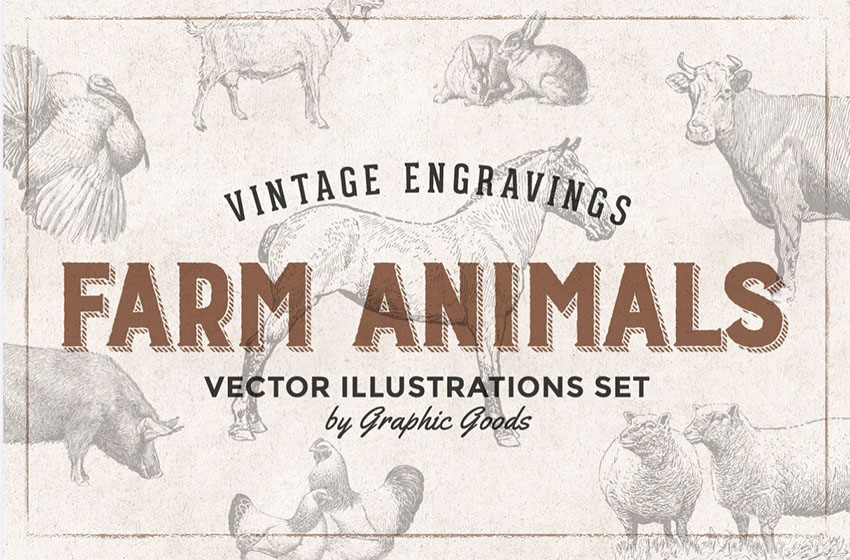 Vintage Animal Illustrations - Engraving