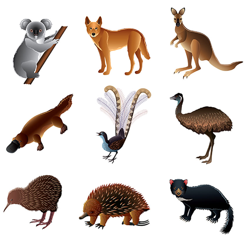 Australian Animal Illustration Set Vol. 2