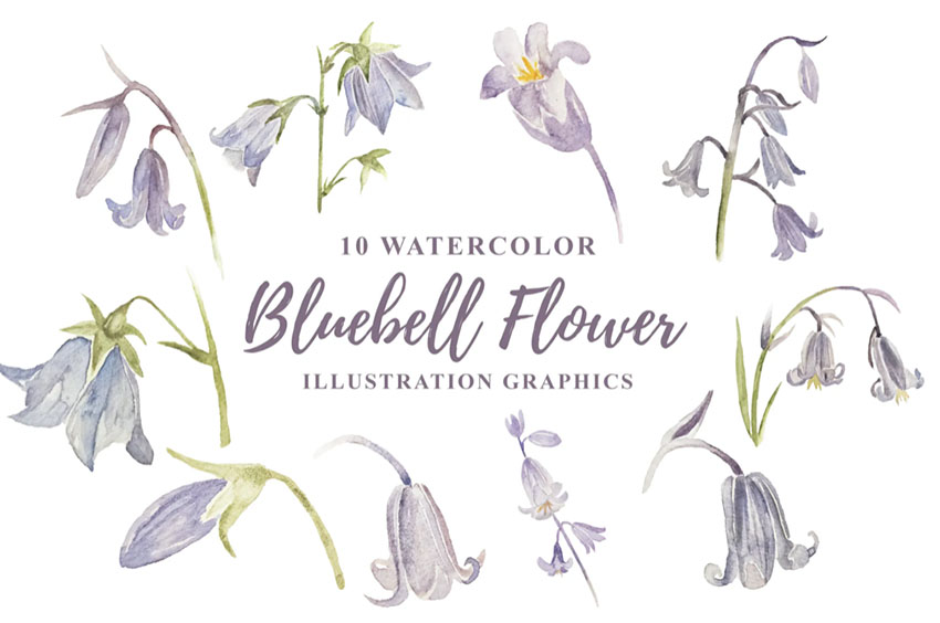 Bluebell Botanical Watercolor