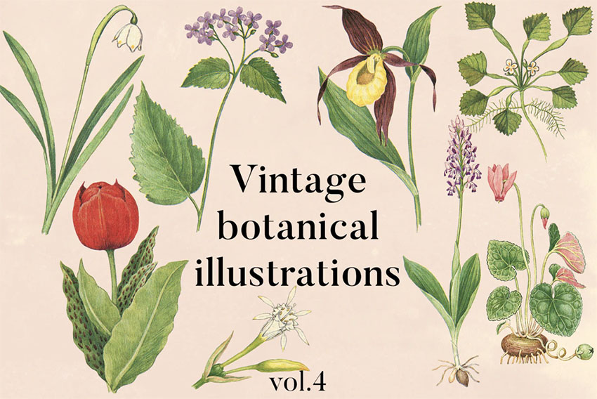 Victorian Botanical Illustration