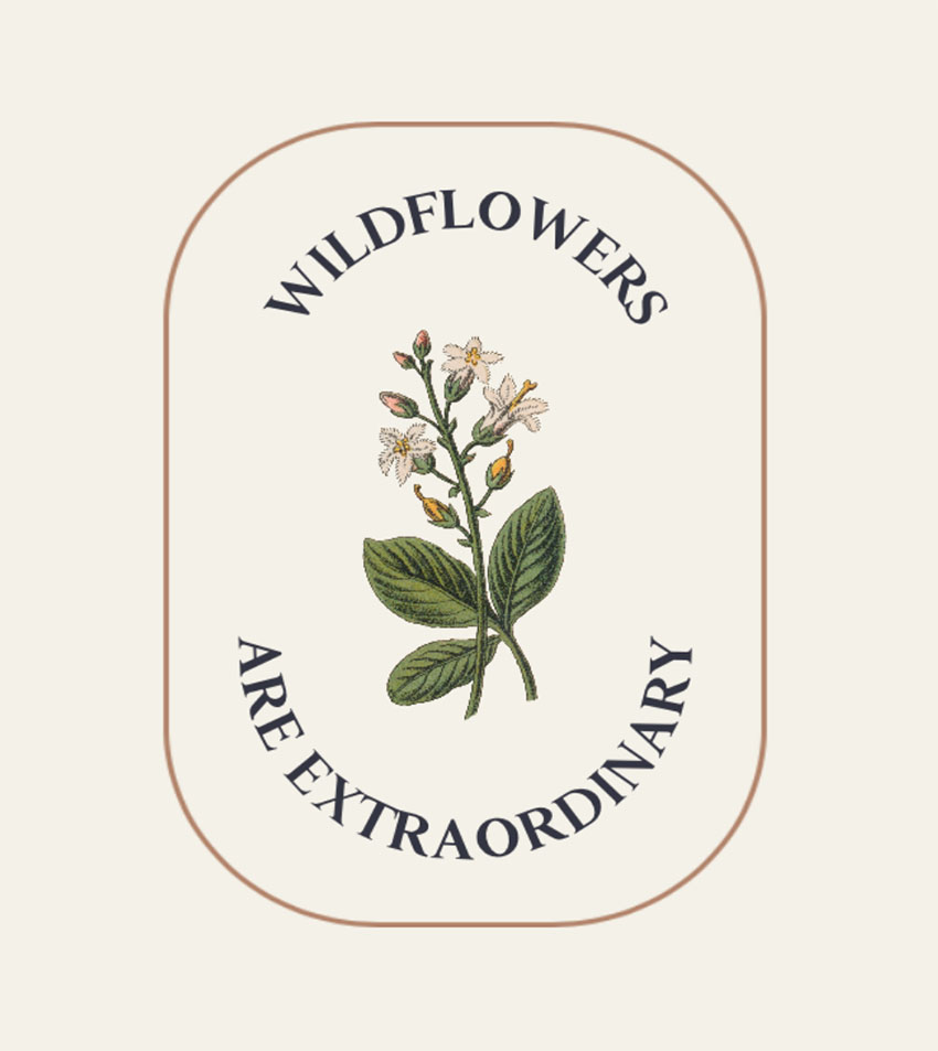Wildflower Botanical Illustration