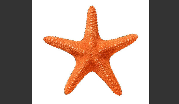 Select the Starfish