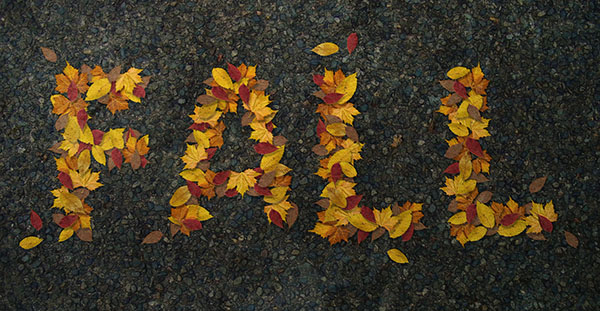 How to Create a Realistic Autumn Leaves Text Effect in Adobe