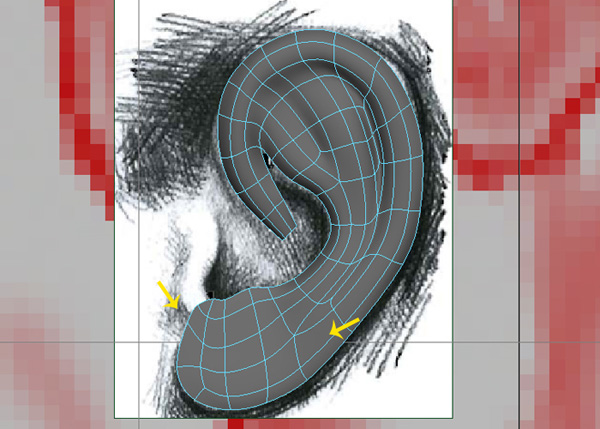 Basic shape of the ear