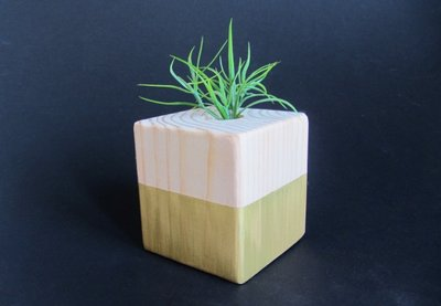 Preview for How to Make a Wooden Air Plant Holder