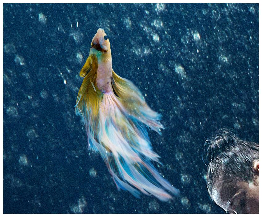 elongate fish tail
