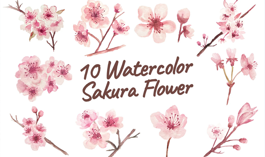 10 Watercolor Sakura Flower Illustration Graphics
