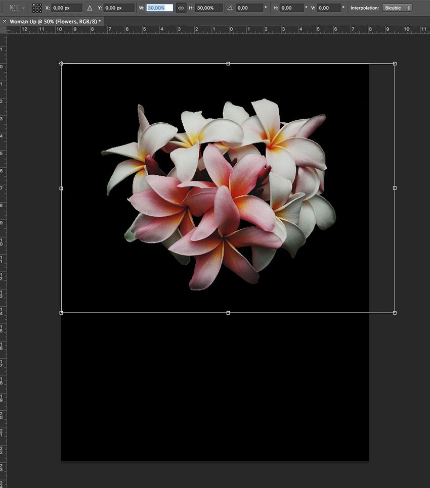 Resize the flower layer on the new document
