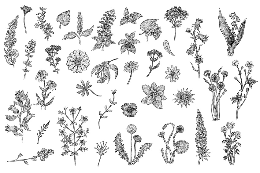 Herbs and Flowers by Eugenia Hauss