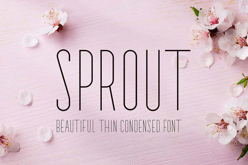 Sprout Thin Modern Fonts San Serif