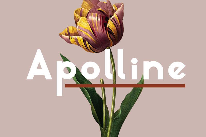Apolline Modern Sleek Fonts Sans Serif