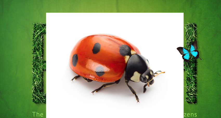 Add ladybug and butterfly to the main image